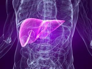 Медики объяснили, с какой частотой обновляются органы человека